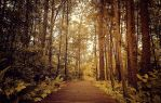 Through the Forest by AnthonyPresley