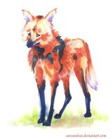 Maned Wolf by Carcaneloce