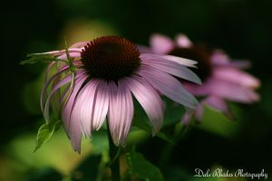 Flower by DalePhotography