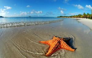 Starfish by Kalm