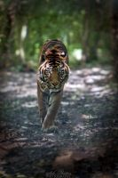 Danger in approach... by Seb-Photos