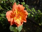 Bright Orange by Photography-Dreamed