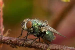 Wet Fly by lueap