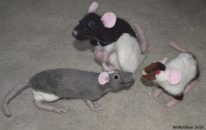 Needle Felted Rats by wolfysilver