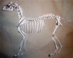 K9 skeleton by overcome