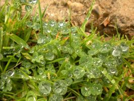 Wet Grass by Pickles4LES