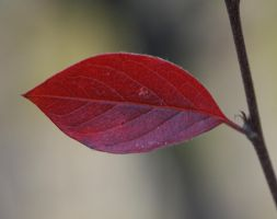 leaf 2 by EphemeralMind
