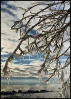 Ice Trees 2 by JS2010