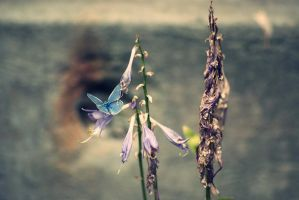 blue butterfly by nbd12