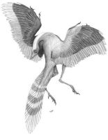 Archaeopteryx lithographica by PaleoAeolos