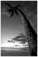 Magic Island Palm... by PacIslander2