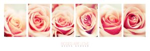 :: Roses Are Love :: by onixa