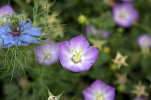 Some Flower Updated by sidharth0384