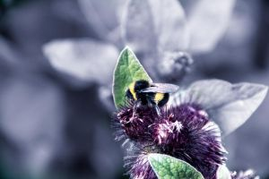 Beeing 2 by miel-g