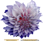 KymsCave-Stock Flower 10 by KymsCave-Stock