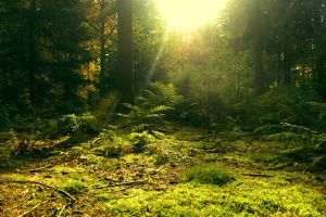 forest peace by lindaatje