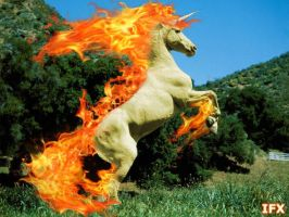 Real Life Rapidash by InfinityFangX