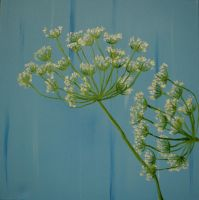 Queen Anne's Lace by DontDeconstruct
