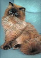 Persian Cat by ArtsandDogs