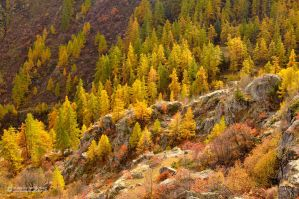 Colorful Autumn by matthieu-parmentier