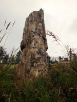 Tower Of Orthanc by ThePeculiarMissE