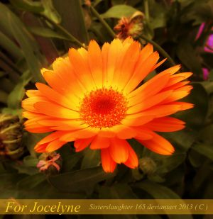 For Jocelyne by Sisterslaughter165