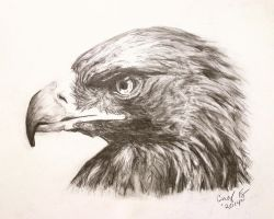 Golden Eagle by lost-nomad07