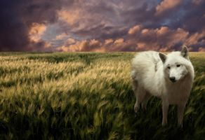 Wolf Manipulation by Fears-Manipulations
