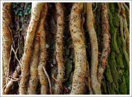 Close Up of Tree Trunk by neoweb