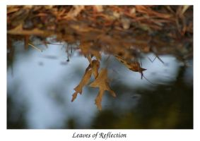 Leaves of Reflection by mxtheory