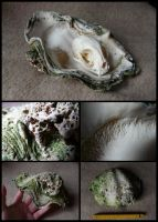 Giant Clam Shell by CabinetCuriosities