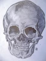 Skull- anatomy study by YourWayIsLonely