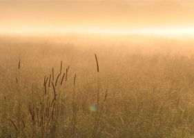 Grass in the Mist by nectar666