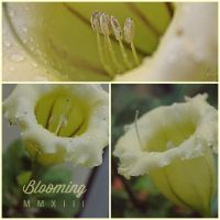 Blooming Moments by EuniceGamboa