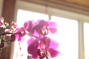 orchids by shadoe-gary-paul