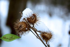 The Trapped Little Snowflake by AllisonDahl