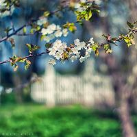 Printemps  Abstrait by Oer-Wout