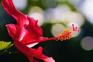 Hibiscus 3 by Tyyourshoes