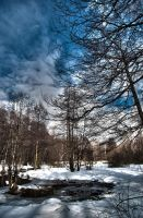 HDR Forest by Lineageman
