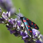 red on blue by pers-photo