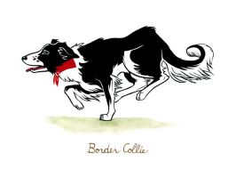 Border Collie by MonicaMcClain