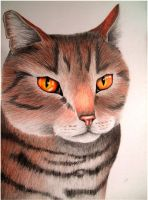 Tigerclaw by x----eLLiE----x