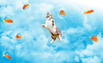 cat dream by tanjila