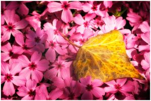 ...between the flowers... by MartenD