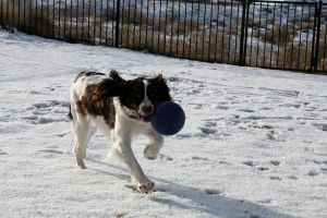 Dog with a ball by Sinned-angel-stock
