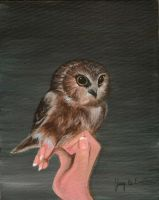 Baby Owl by 3ampainter