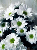 White flovers 1 by Lady-Integra
