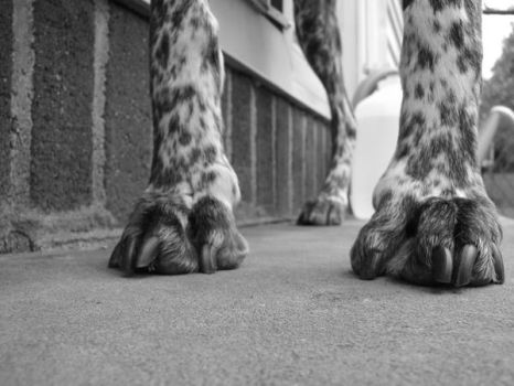 Dog Legs by skimask123