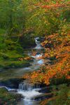 Autumn beck by cprmay