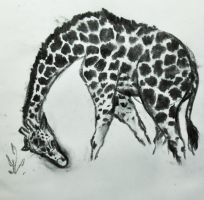 Zoo sketches: Giraffe 1 by ziksan